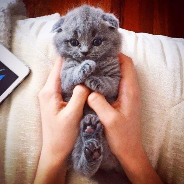 Tout ce qui est petit est mignon : ces animaux qui tiennent dans le creux de votre main en sont la preuve ! | Daily Geek Show