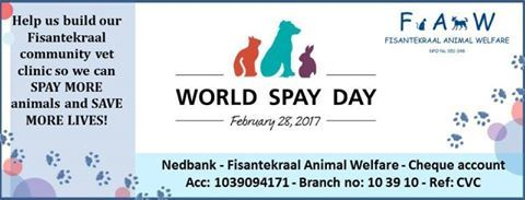 Please help us to improve the future lives of animals by helping us get our community clinic operating theatre up and running so we can spay many more animals. It's the only way to make a real, lasting difference AND save thousands of animals from fates worse than death.  Nedbank - Fisantekraal Animal Welfare - Cheque account - Acc no: 1039094171 – Branch no: 10 39 10 (Tygervalley) Reference: CVC