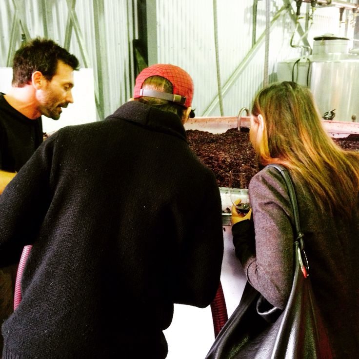 Checking out a red ferment with Justin at Soulgrower's Wines.