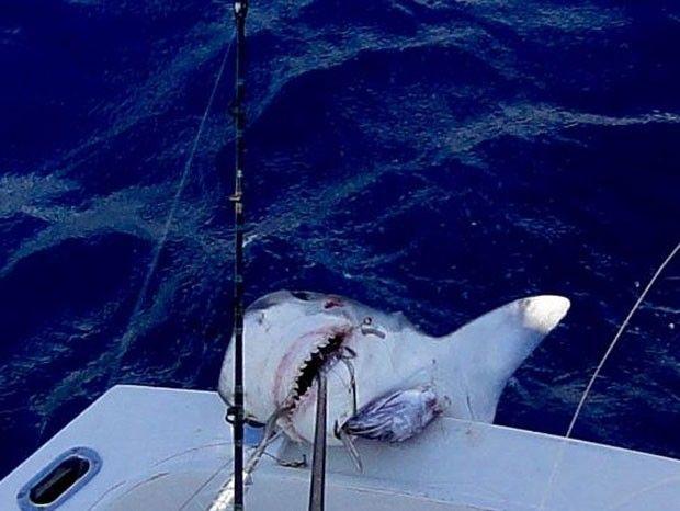 Menino de 12 anos pesca tubarão de mais de 2 metros!