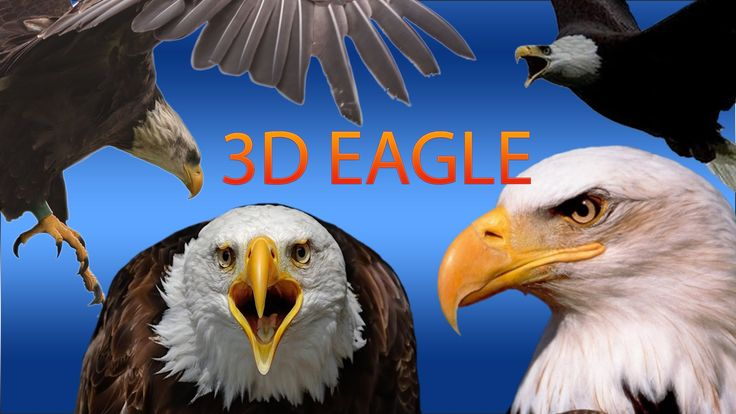 Eagle Finger Family Nursery english 3d  rhymes    Children Animated fing...