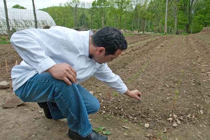 Checking sprouts in the Hemlock Hill Farm lettuce field.: Lettuce Fields, Hemlock Hill, Hill Farms, Farms Lettuce