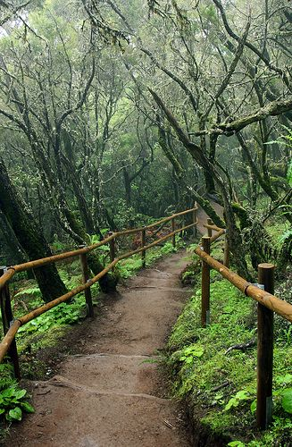 Subtropical rainy forest in the National Park Garajonay La Gomera Spain canarias