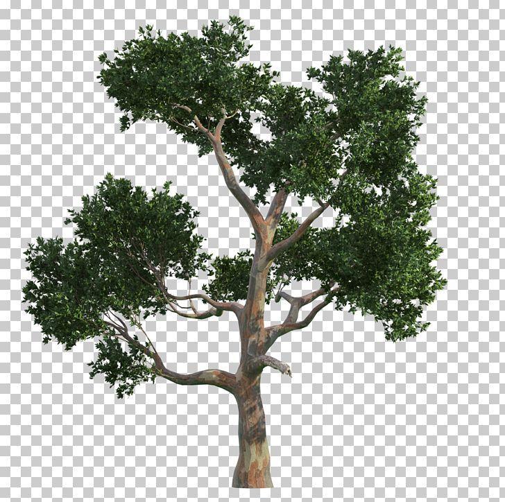 Tree Gratis Vecteur Png Autumn Tree Branch Christmas Tree Download Euclidean Vector Tree Drawing Christmas Tree Drawing Drawings