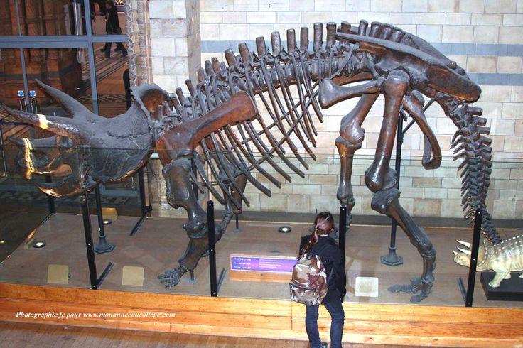 Natural History Museum Dino Pin