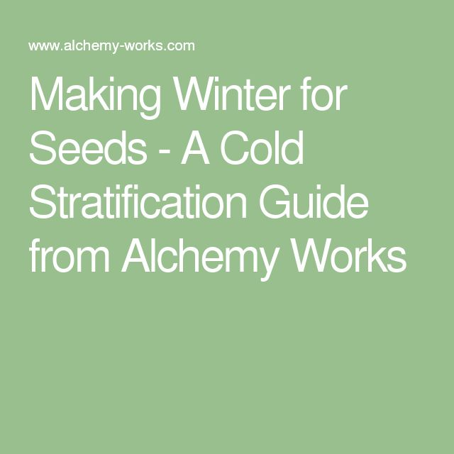 Making Winter for Seeds - A Cold Stratification Guide from Alchemy Works
