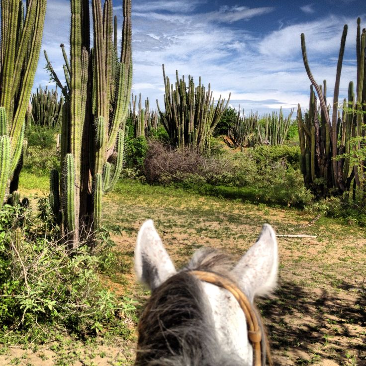 Horseback riding through the desert of Tatacoa - Colombia