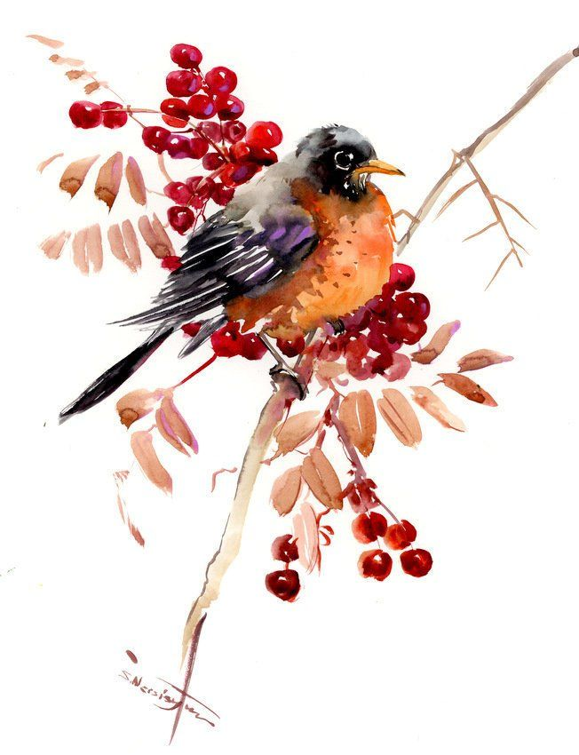 American Robin Original Watercolor Painting State Birds Robin