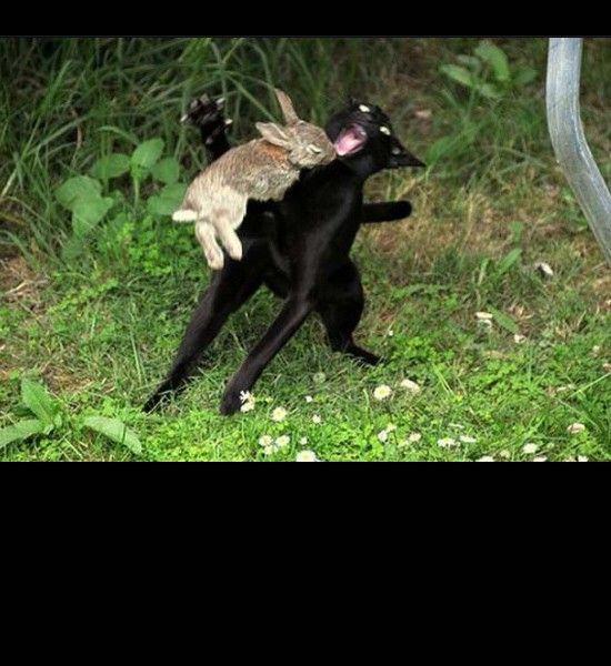 bunny attack cat