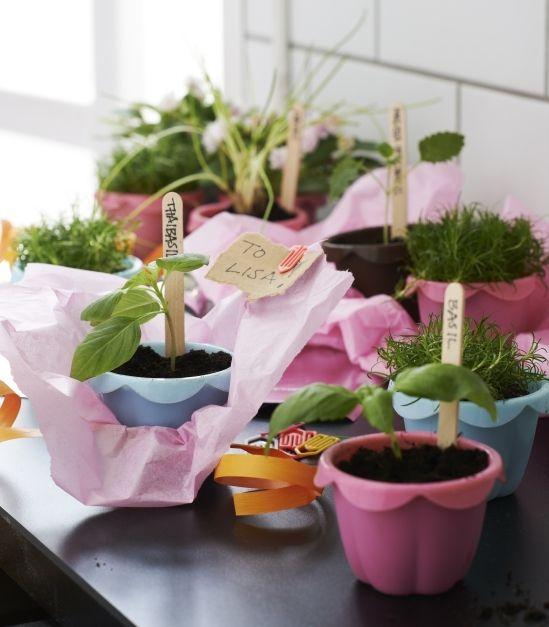 Máme pre vás zaujímavý tip na jarnú pozornosť pre priateľov. Zasaďte rastlinky do košíčkov na pečenie SOCKERKAKA. Keď vyrastú, možno sa vám košíčky vrátia späť aj s chutným mafinom ako poďakovanie.