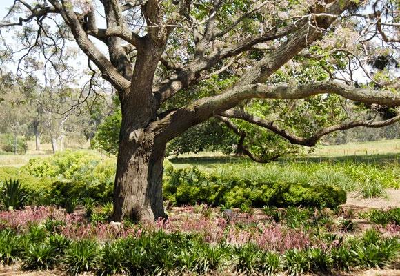 spectacular tree and beautiful garden