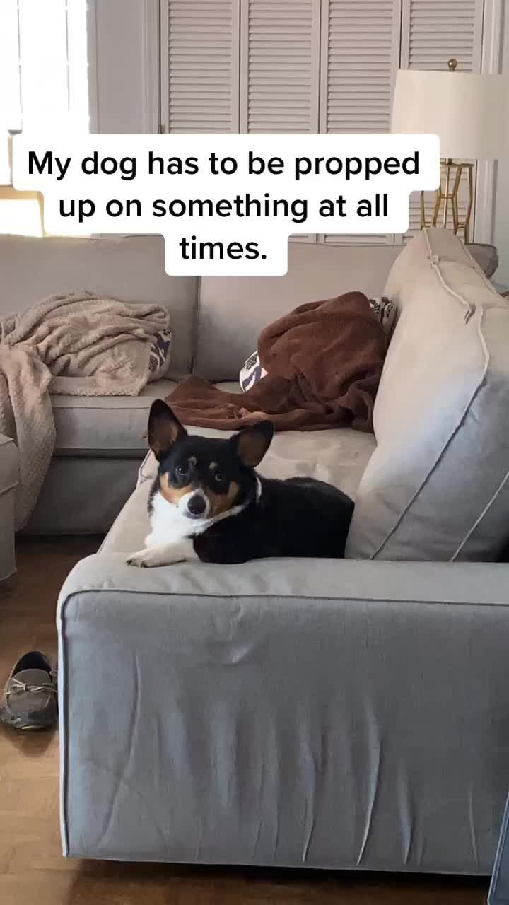 Does Your Dog Have A Weird Quirk Like This Follow Madiimadethis On Tiktok For More Quirky Humor Somebody S Watching Me Your Dog