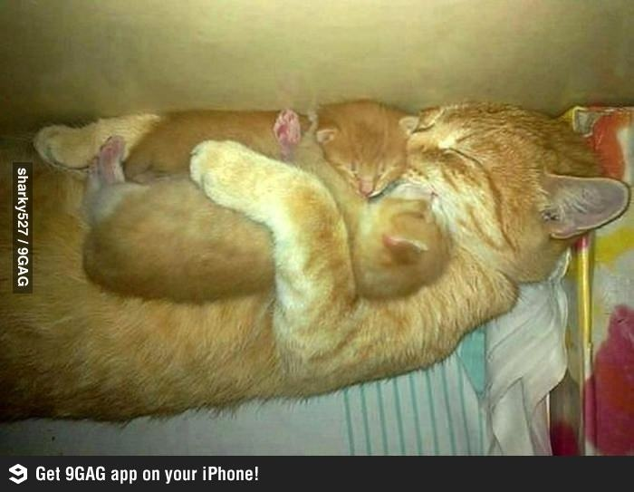 Sleeping on Mommy. How precious! Now tell me animals don't have love for their babies or really miss them when they are separated.