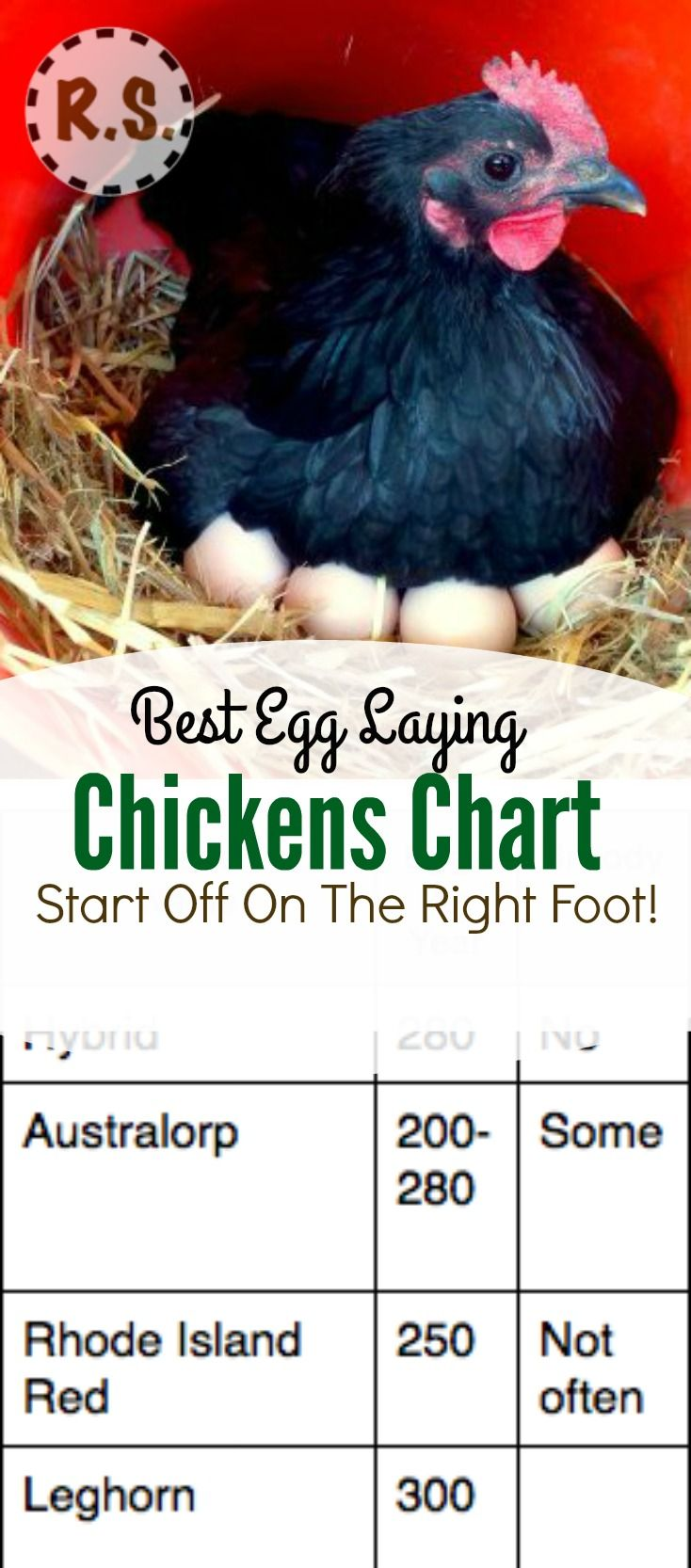 179 best images about chicken stuff on pinterest the chicken a
