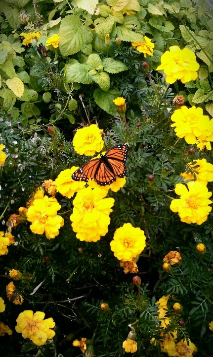 Botanical Gardens Wichita Ks Kake Land Wichita Kansas