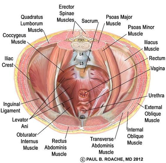 In Subtle Yoga Anatomy The Pelvic Floor Is Typically Associated