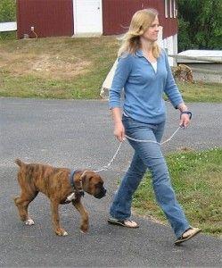 in de gemente veghel moet u betalen voor u hond.