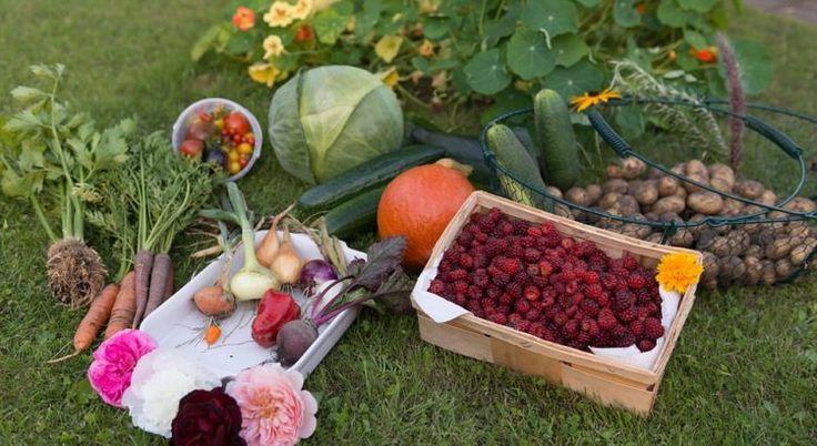 12 plantas que ajudam a controlar as pragas em uma horta orgânica