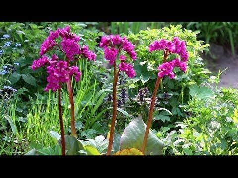 Тенелюбивые и теневыносливые растения для дачи