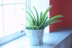 Houseplant gnats are killed with a mixture containing hydrogen peroxide.