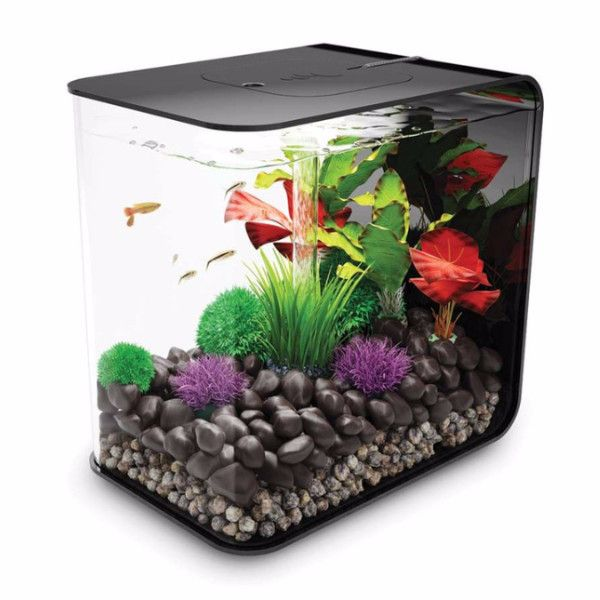 25 best ideas about small fish tanks on pinterest large for Small pet fish