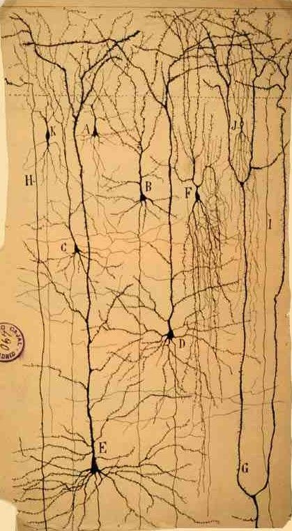Ramón y Cajal, el más grande científico español. | Matemolivares