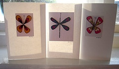 Butterfly and Dragon Fly Cards