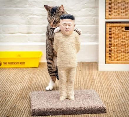 15 Best Cat Scratching Posts - From Fun To Fabulous | Petslady.com