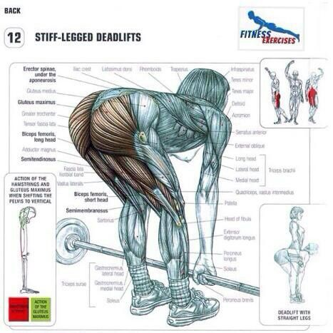 81 Best Images About Weight Training On Pinterest