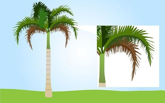 How to Trim a Palm Tree: 6 Steps (with Pictures) - wikiHow