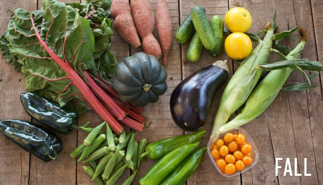 Farmhouse Delivery this week!  Eat well. Support your local farmers.: Farmhouse Delivery, Food Inspiration, Houston Eats, Local Farmers, Fall Veggies