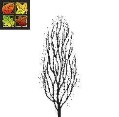 Betula pendula 'fastigiata' - Upright Birch - Pyramid Birch Tree Blerick Trees Buy Online Trees Advanced Trees, Screening Plants, Fruit Trees
