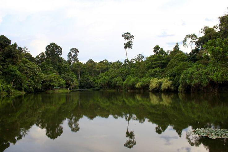 Rainforest Discovery Center Sepilok