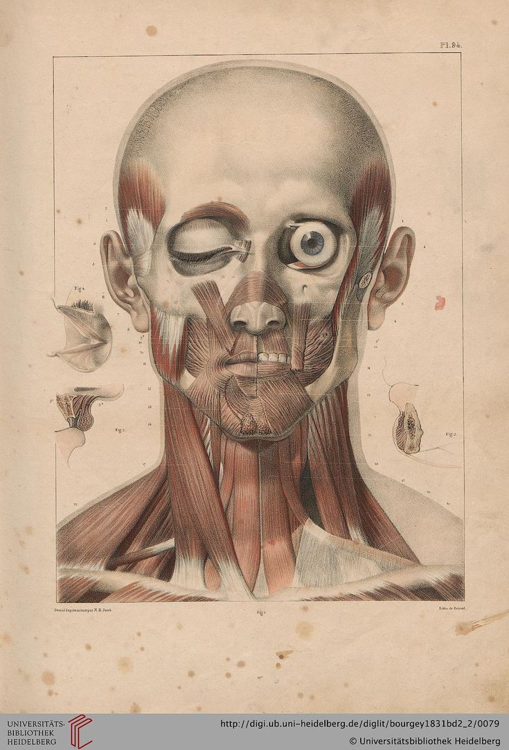 32 best Projekt Buch images on Pinterest | Menschliche anatomie ...