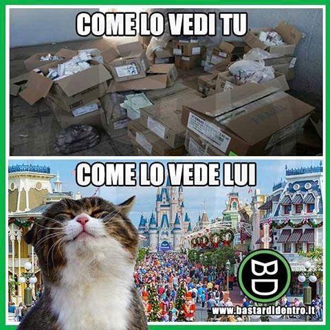 Punti di vista umani e felini! Tagga i tuoi amici e #condividi #bastardidentro #gatto #scatola www.bastardidentro.it