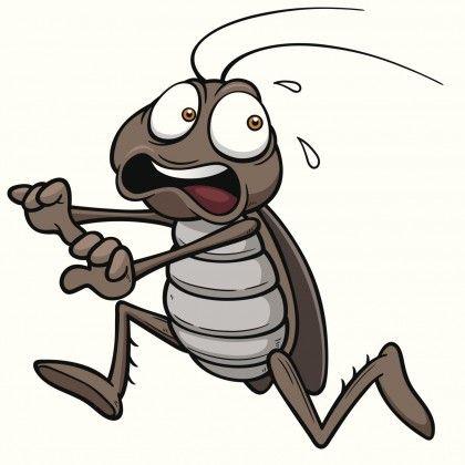 rimedi-naturali-scarafaggi-casa-cucina (2)