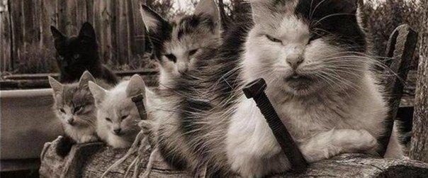 Деревенские коты » Смешные Анекдоты Истории Цитаты Афоризмы Стишки Картинки прикольные Игры