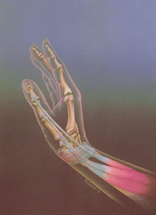 #Anatomy #Hand #Wrist