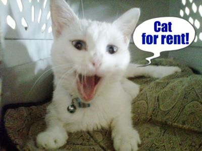 """Posted October 19, 2011 """"Thank you for calling Rent A Cat, may I help you?""""  """"Yes, this is Elisa Taylor. I have the weekend off and I'd like to rent Suzy for the whole weekend if she's available. She was so great the last time I rented her.""""  Believe it or not, readers, this could be the norm for cat lover's and cats to connect in the not too distant future."""