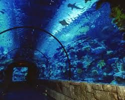 Shark Reef Aquarium - Mandalay Bay