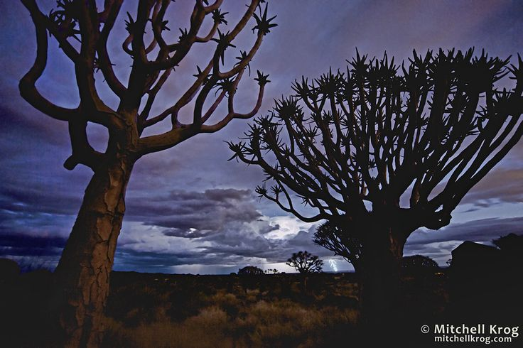 Lightning Storms Approaching the Quiver Tree Forest in Namibia