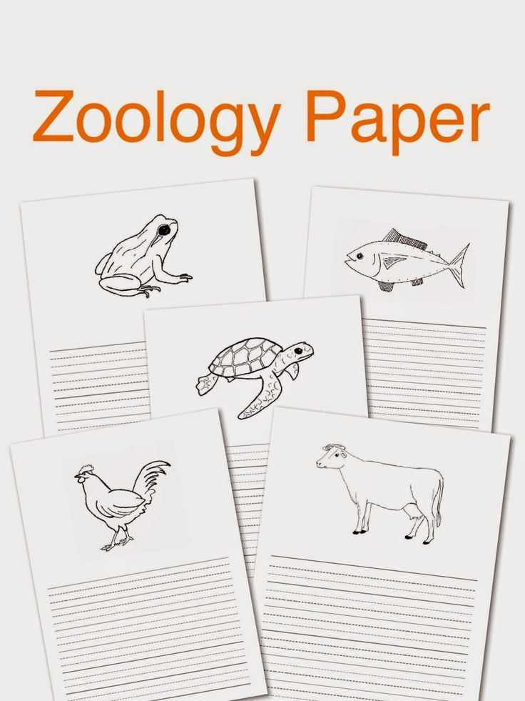 Elementary Observations: Project Paper - Zoology