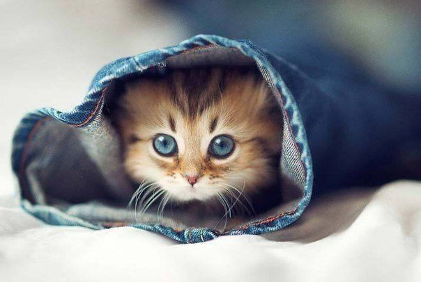 Анекдот: Всем нравятся маленькие котята, маленькие щенята, ... - «Я Юморист», анекдоты, приколы, юмористические стишки, видео и картинки