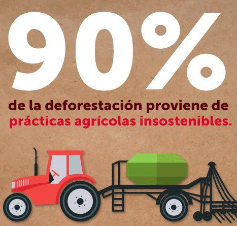 ¿Es un mito que la producción de #papel destruye los #bosques? #Hogaressauce.