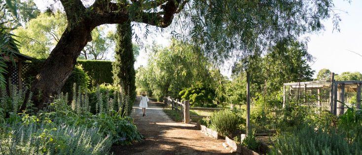Dream Garden :: Glenmore House (The Plant Hunter)