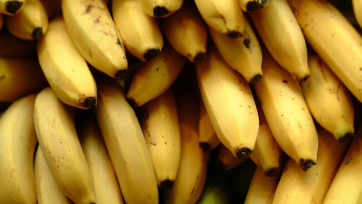 """The world's favorite fruit is slowly but surely being driven to extinction. The world's banana supply is under threat from Panama disease, the same fungal plague that almost destroyed it in the 19th century, Quartz reports. Back then, the banana industry was saved by a disease-resistant variety known as the Cavendish. Now, Cavendish bananas are on every U.S. breakfast table. But the variety has no defense against a new strain of Panama disease..."""