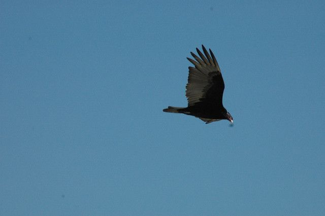 BIRDS OF PUERTO VALLARTA MEXICO (beach birds tropical water ). Photo by PETERSPIXS