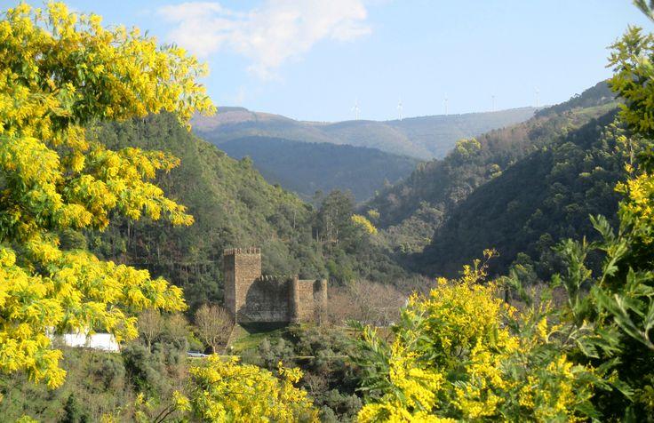 Serra da Lousã, Acacias blossoms