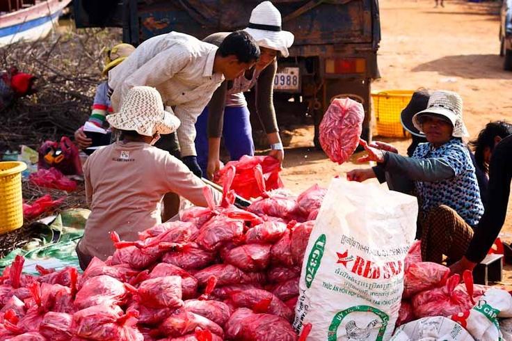Kambodia
