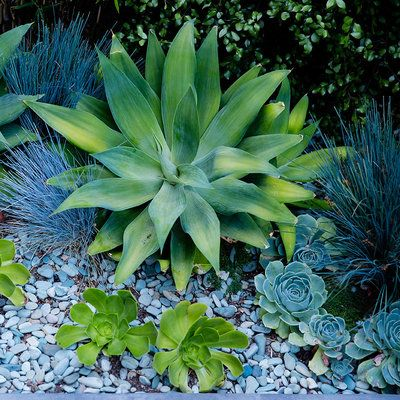 11 best shady succulents images on pinterest succulents for Succulents that do well in shade